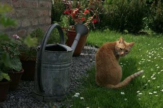 Kater Leo mit Giesskanne im Garten