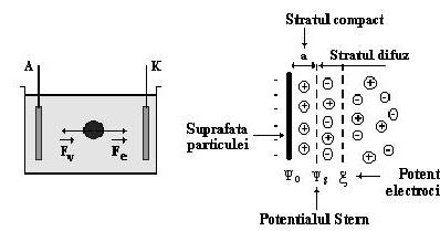 AMG: Biochimie- Curs 11 , Electroforeza