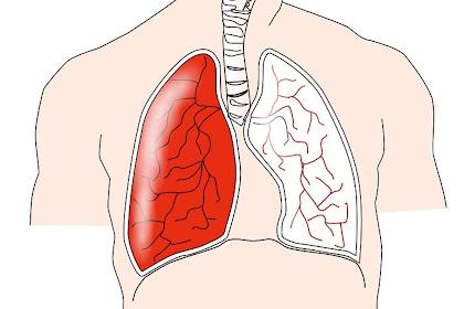 Mari Mengenal Organ-Organ Sistem Pernapasan Yang Ada Pada Manusia Beserta Fungsinya