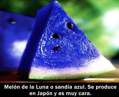 sandia-falsa