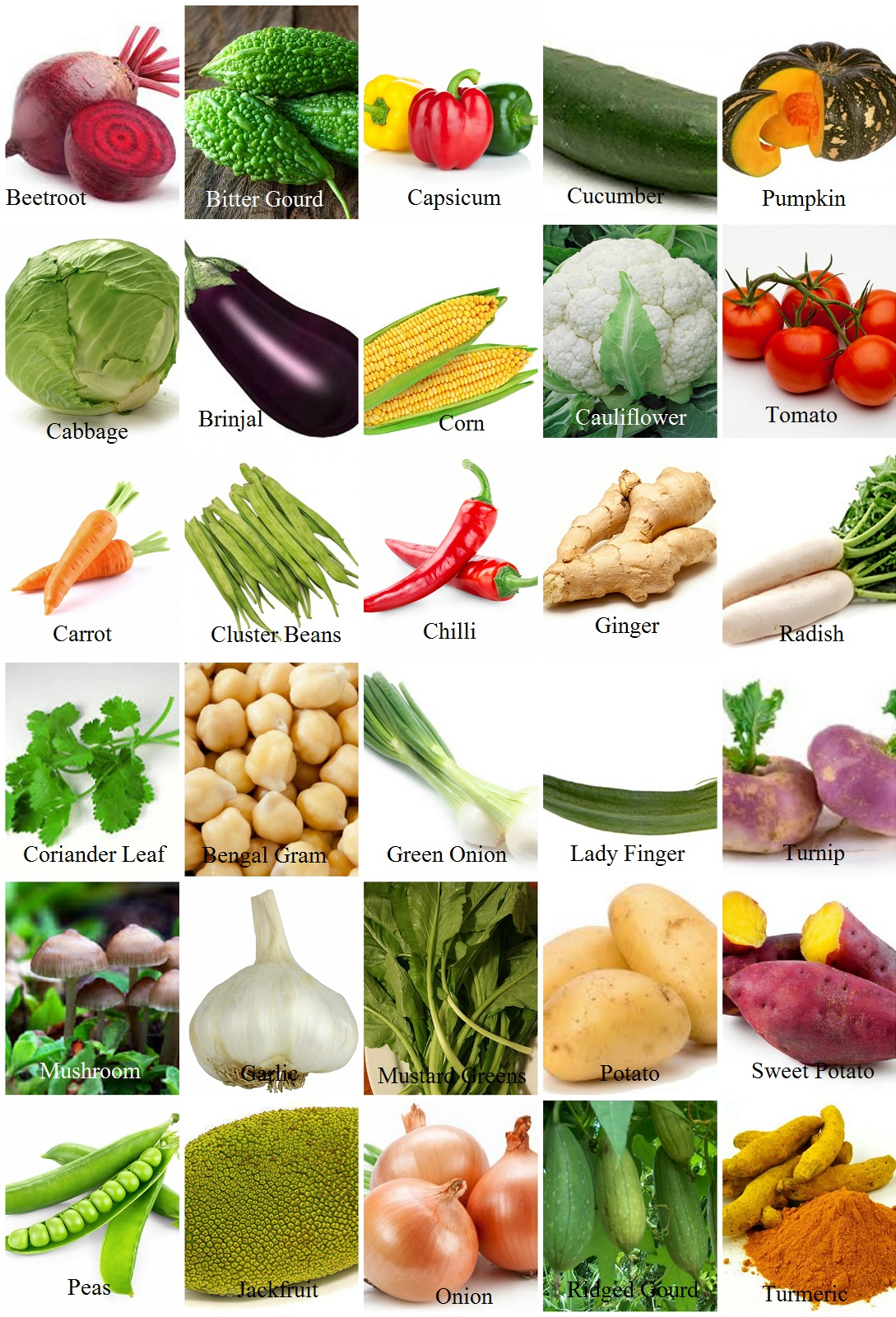 Vegetables Name With Pictures In English - Vegetable Images