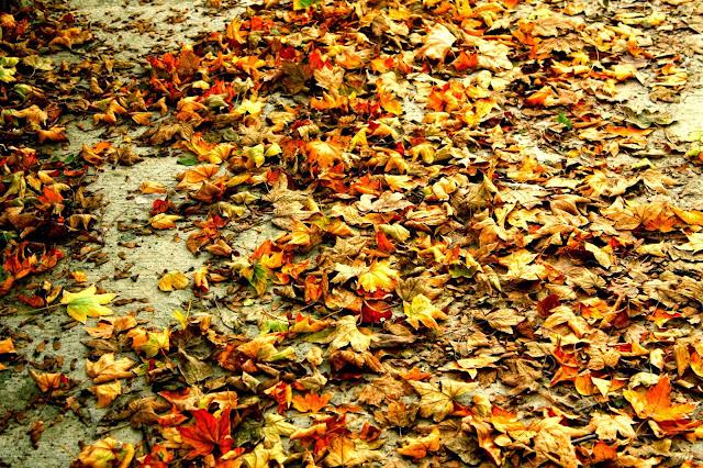autumn leaves in medgidia