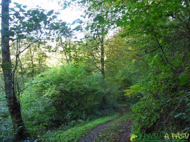 Bosque de Cea