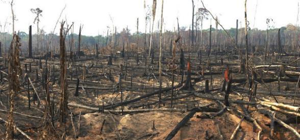 Delito Ambiental o Ecológico