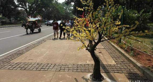 Pak Anies, Kok Trotoar Sudirman Ditanam Pohon Palsu?