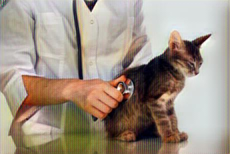 Gato con problemas respiratorios con el veterinario