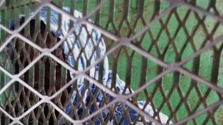 Afrique: Soudan, peine de mort annulée pour la jeune Noura Hussein