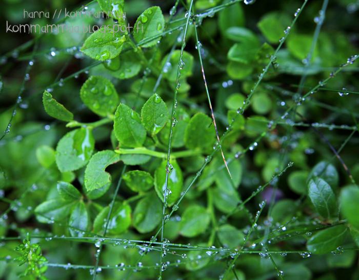 sadepisara kosteus varvut maassa heinä