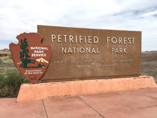 Exploring Petrified Forest National Park with Dogs
