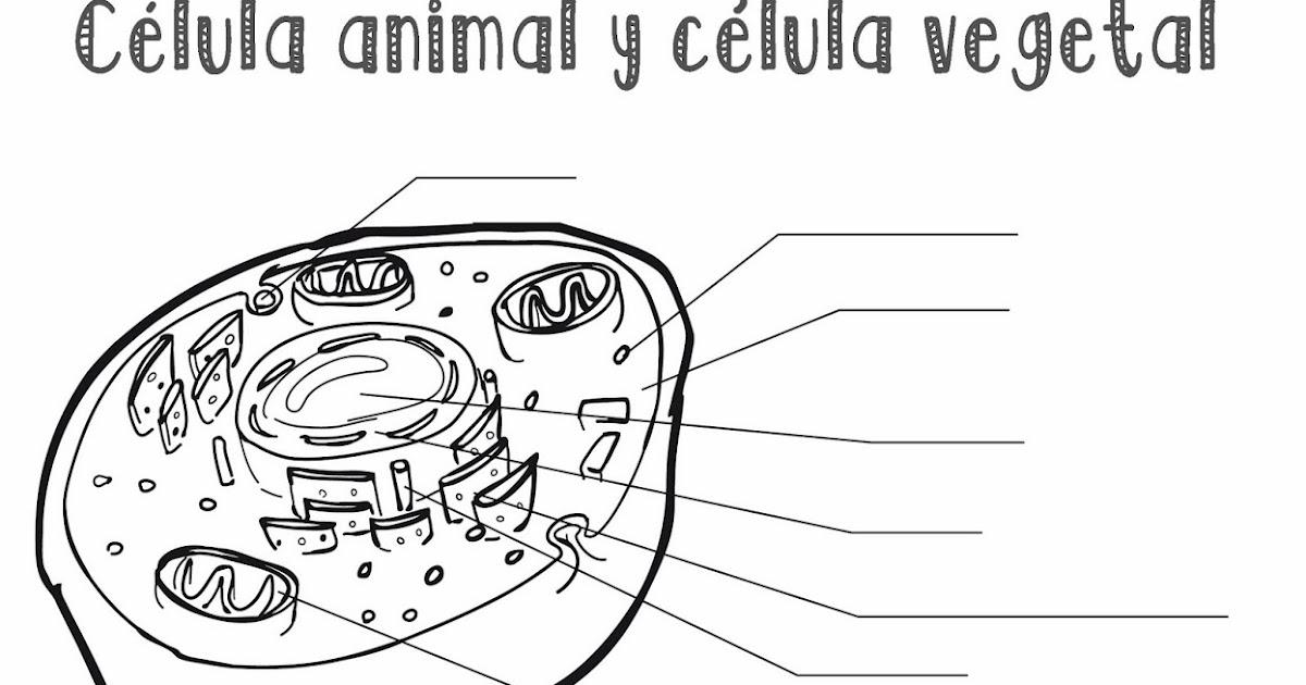 Dibujo De Celula Animal Para Colorear: Célula Animal Y Célula Vegetal