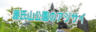 源氏山公園のあじさい