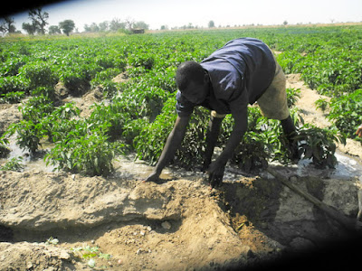 AGRICULTURE OPPORTUNITIES IN PLATEAU STATE PLATEAU 2BSTATE2