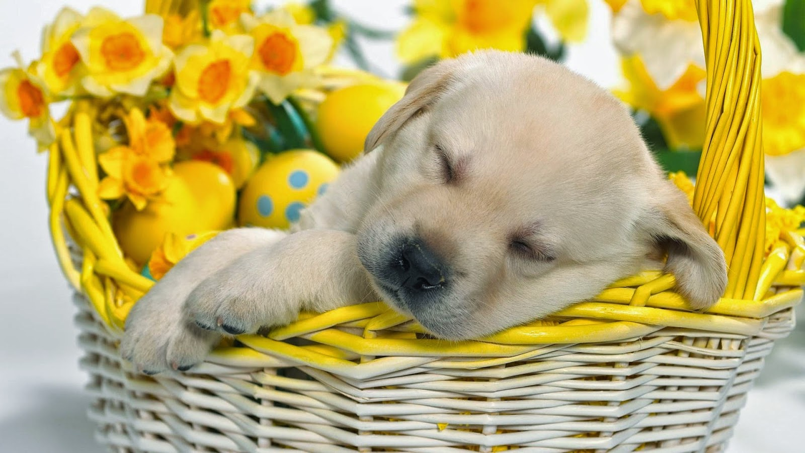 Cute Dog Wishes Good Night Wallpaper With Message Entertainment