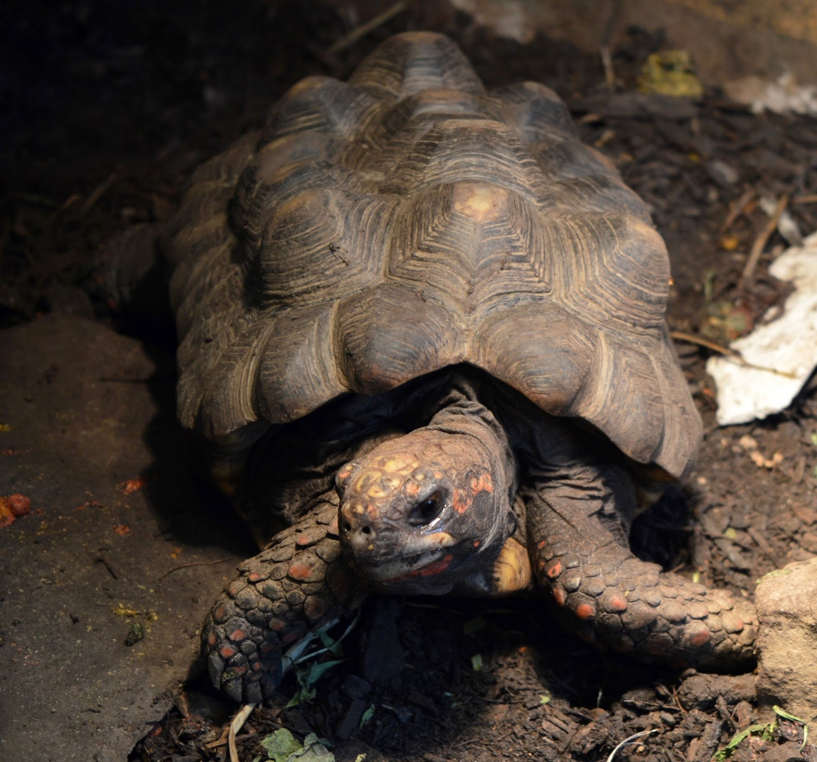 Ouseburn Farm Newcastle | A FREE Place to Take the Kids - tortoise