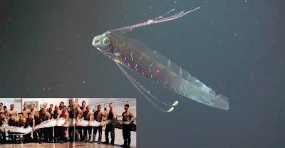 Resultado de imagem para peixe-remo