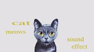 how cat sounds