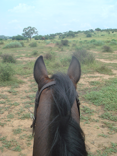 norsu, mashatu, botswana, hevonen, safari, riitta reissaa