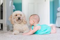 Dziecko bawi się z psem na dywanie w salonie