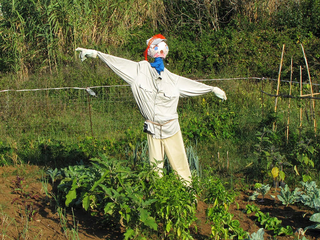 Scarecrow, urban vegetable gardens, via Goito, Livorno