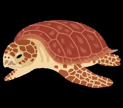アカウミガメのイラスト(亀)