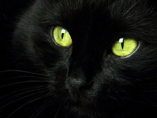 Resultado de imagem para felinos-visão