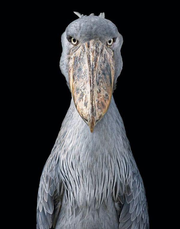 Chim hoang dã