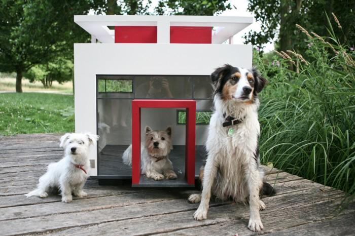 pet  Tipos de Casas para seu Cãozinho
