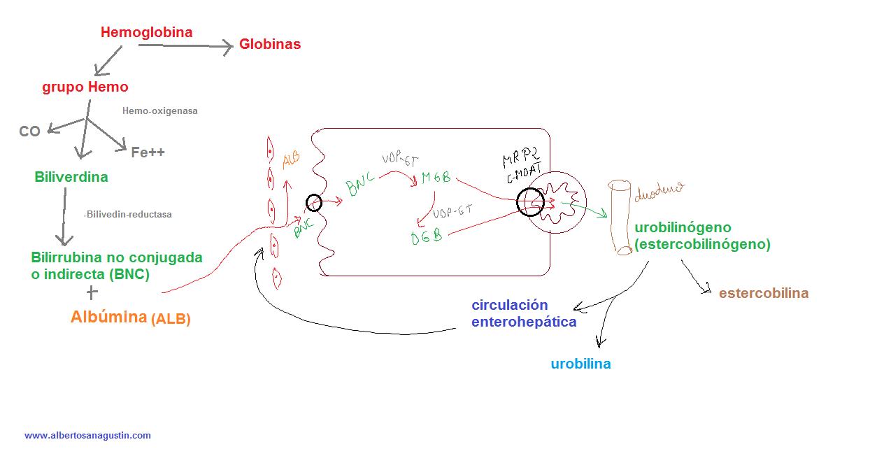 acelerar metabolismo para adelgazar reseñas