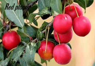 7 Alasan buah plum sangat baik untuk kesehatan