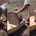 White South African forces a black boy into a coffin (Video)