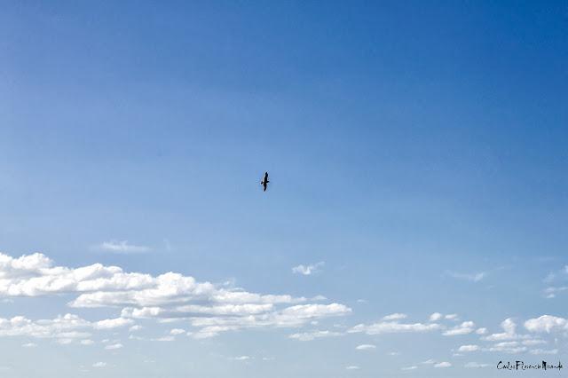 Pájaro con alas extendidas volando sobre nubes en cielo azul.
