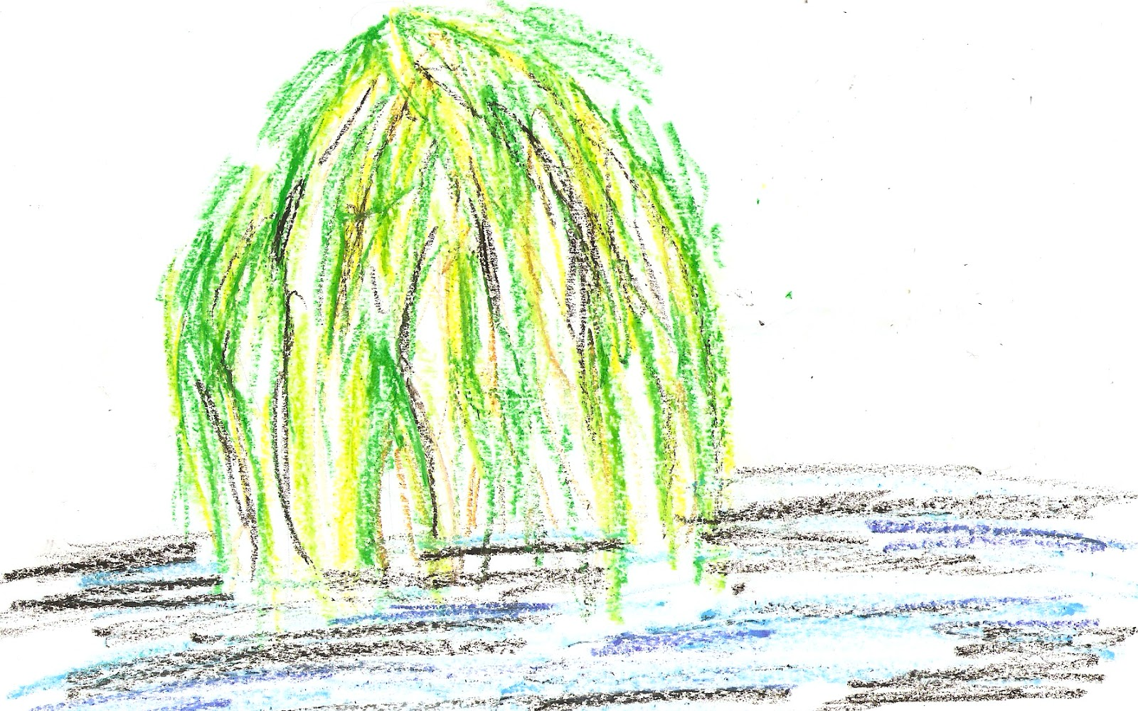 Lollipops and Salamanders: Willow Tree - 21/8/12