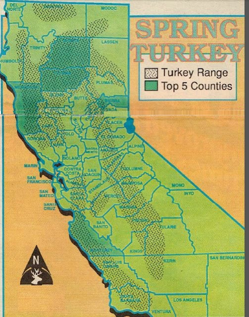 how to hunt california, turkey hunting