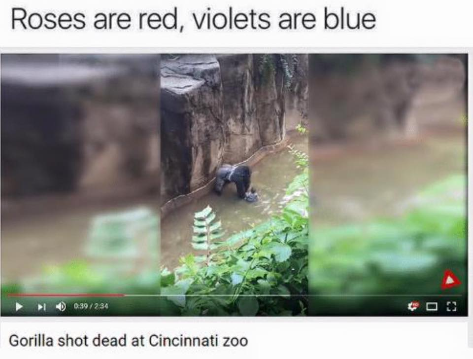 Roses are red, violets are blue. Gorilla shot dead at Cincinnati zoo. Harambe.