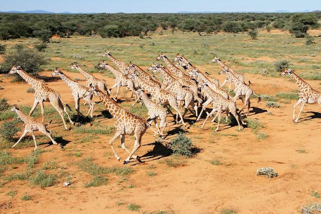 Epacha Lodge Etosha National Park, Namibia