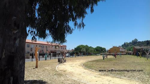 El parque bajo la sombra del eucalipto