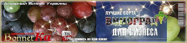 Саженцы винограда купить лучшие сорта Украина, 0985674877, 0957351986, Grapes Broker