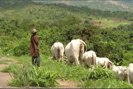 Giving Your Land For Ranching Better Than Death – Presidency