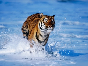 jungle animals hd wallpaper