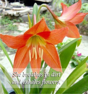 She breathes in dirt and exhales flowers.