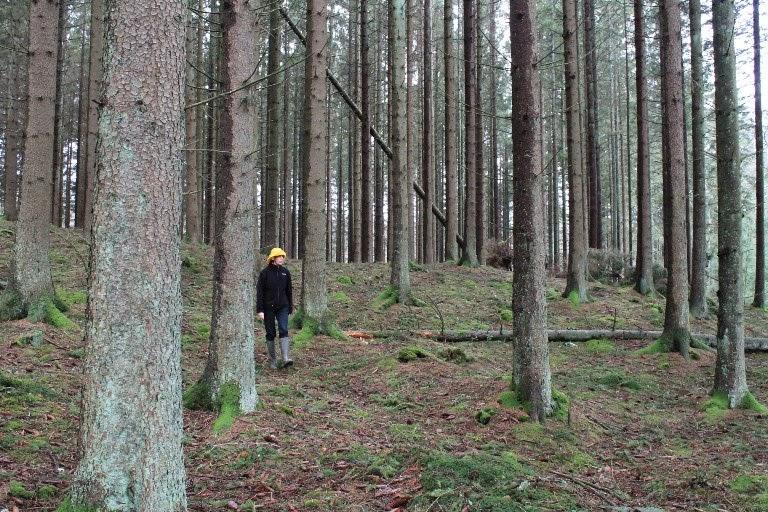 In bosco per lavoro