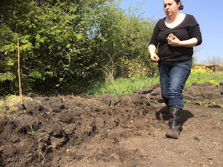 Woman planting potatoes, life on pig row