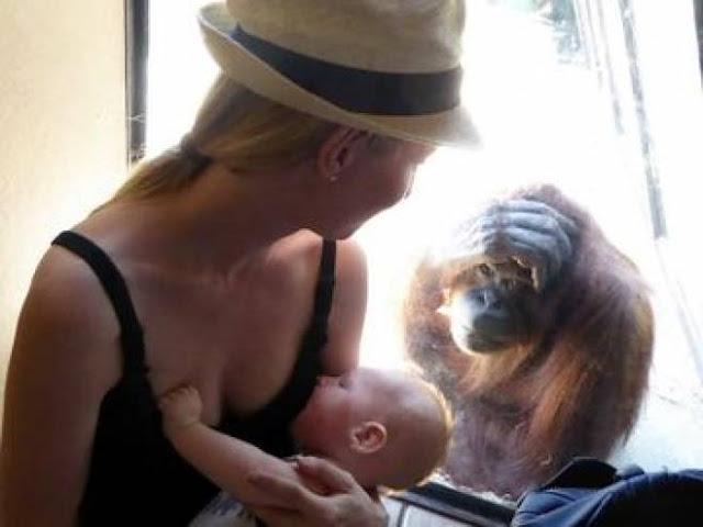 أم ترضع طفلها في حديقة الحيوان ..وحصل أمر مدهش ! شاهد ماذا حدث !!