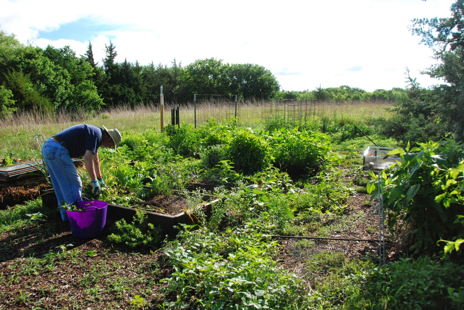 Gaia Garden: Weeds: What Are They Good For?