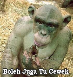 monyet sinpanse lucu bertulisan