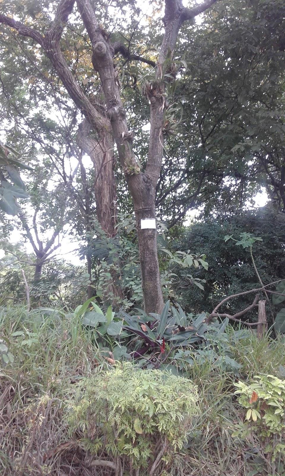Jard n bot nico de guayaquil julio 2016 for Calendario jardin botanico 2016