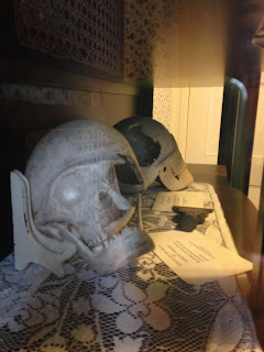 Borden Reproduction Skulls