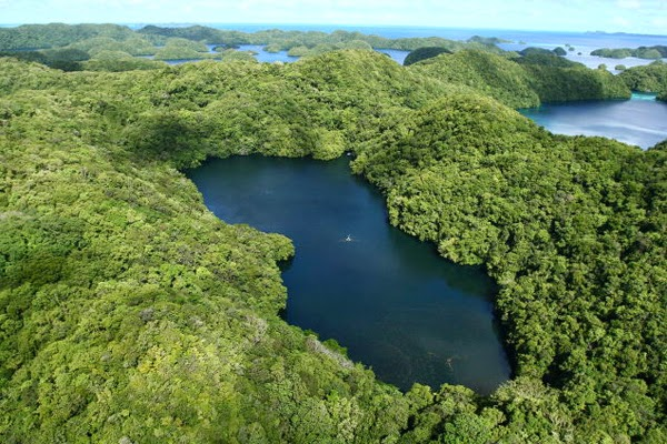 You can find the marine lake on Eil Malk island in Palau. - A Girl Decided To Snorkel In This Remote Lake… And What She Found Will Take Your Breath Away. WOW.