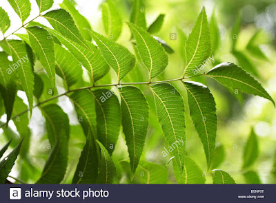 benefits of neem for face