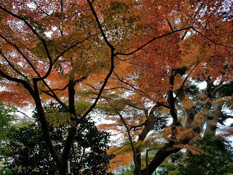 長谷寺寺內的秋色
